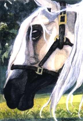 Watercolor by Lori Skoog: BlackNose