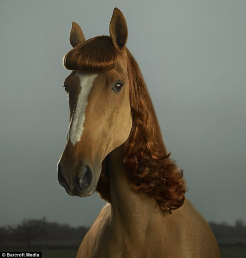 In Australia, Florence the horse looks demure with her fringe and ginger man
