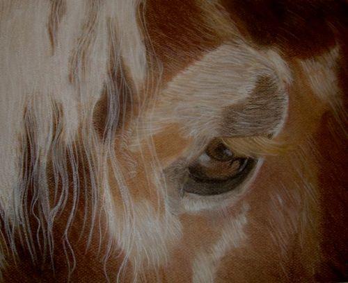 Pastel by Sandy Clark: Smithfields Joe (A Horse at Skoog Farm)
