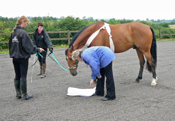 Sarah works with Barney, photo courtesy Horse Heroes