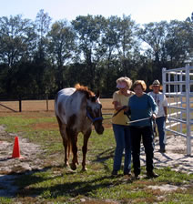 Edie Jane assists a participant in learning an alternative way of leading a horse.