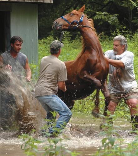 Styles In The Horse World Trailer Loading Enlightened