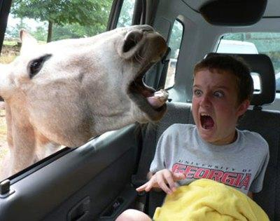 horseparkboy